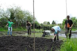 the gang doing a huge soil prep